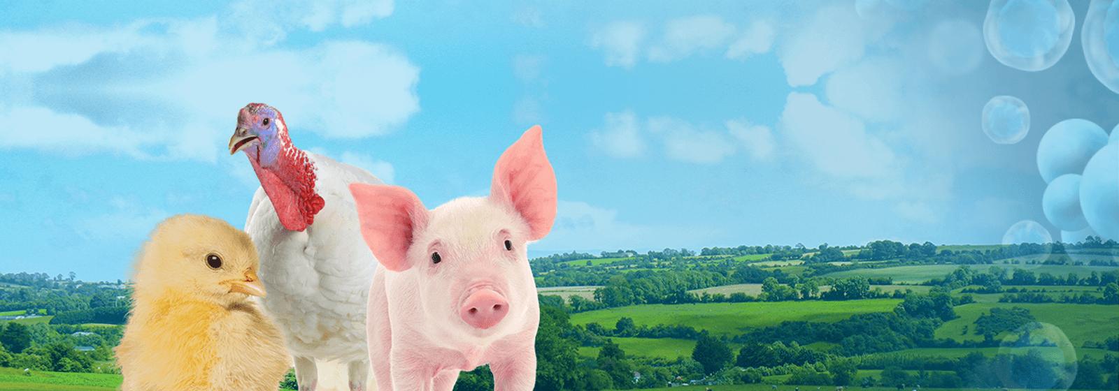 Auranta - Boosting the animal immune system